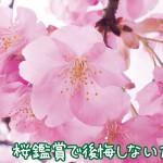 桜のキレイな時期は短い!桜鑑賞で後悔しない為にできること3つ