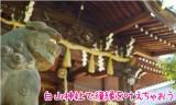 白山神社は縁結びの中でも特にアレに効く!紫陽花もおすすめ