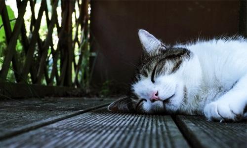 夢をみるのは眠りが浅いから睡眠不足…のウソとホント