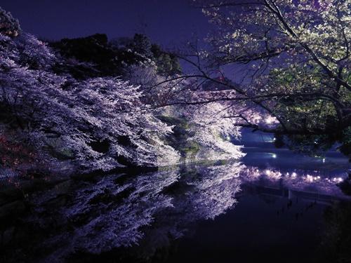 靖国神社の桜まつりとみたままつりをご紹介します!