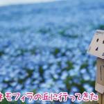 国営ひたち海浜公園でネモフィラの青の世界を体験
