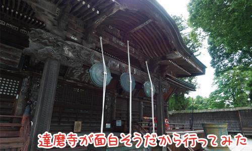 少林山 達磨寺は高崎達磨発祥の地!一度は見るべし!