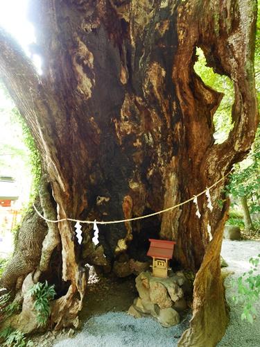 来宮神社の御神木はパワースポット!アクセス方法は?